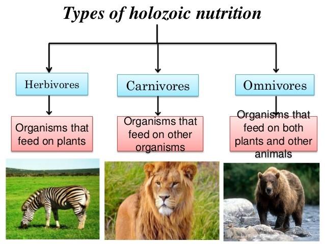 Heterotrophic nutrition - Bioscience Notes