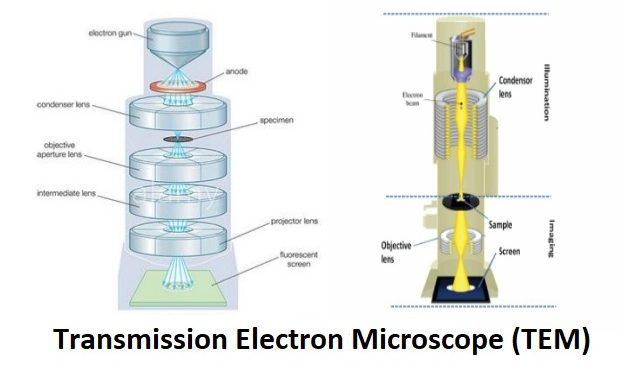 TEM6 632x381 - Principle Of Electron Microscopy And Its Applications